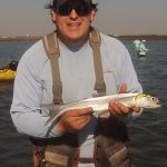 ladyfish on fly rod FWFF in Port Aransas Texas